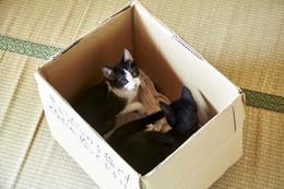 映画「猫なんかよんでもこない。」 箱の中の猫の可愛いオフショット 画像