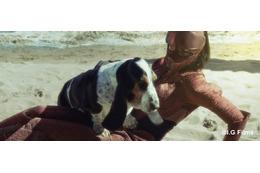 映画「ガルム・ウォーズ」Twitterでドッグショーを開催 愛犬との写真をツイート