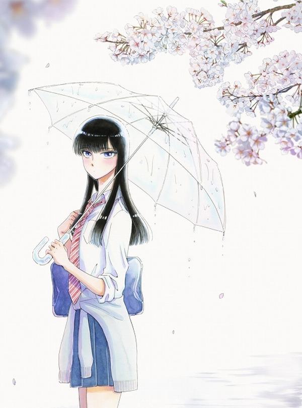 満開の桜の下で傘をさしている橘あきらの『恋は雨上がりのように』の壁紙