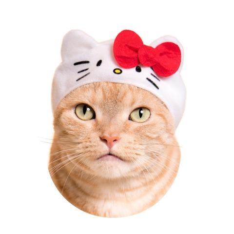 サンリオキャラが猫と合体!? 「ねこのかぶりもの」コラボが、キュート\u0026シュール