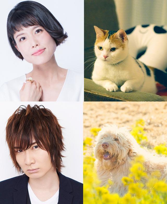 『旅猫リポート』声優情報公開(C)2018「旅猫リポート」製作委員会 (C)有川浩/講談社