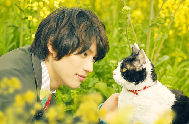 『旅猫リポート』(C)2018「旅猫リポート」製作委員会 (C)有川浩/講談社