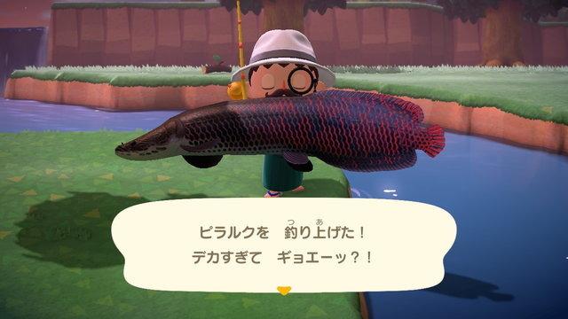 時間 帯 森 ジンベイザメ あつ あつ森 コバンザメ