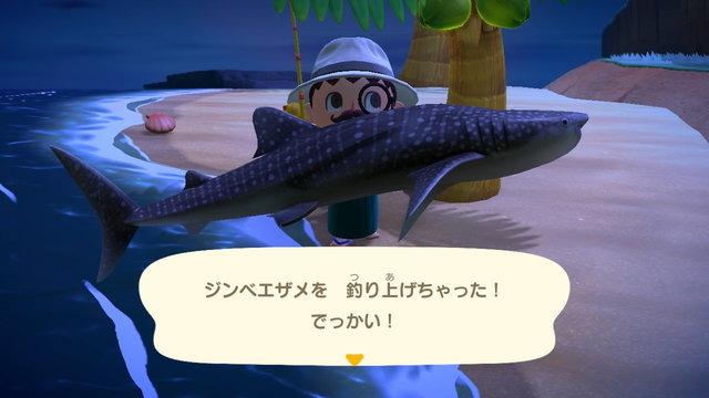 サメ あつ 島 森