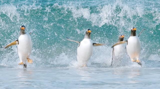 『驚き!海の生きもの超伝説 劇場版ダーウィンが来た!』